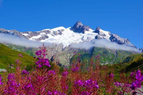 Blumenpracht in der Mont Blanc Region