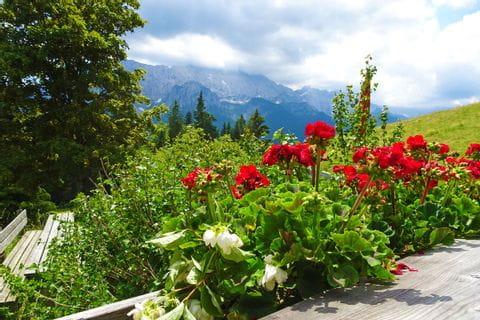 Wunderschöne Blumen bei der Elmauer Hütte