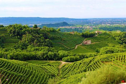 Weinberge bei Treviso