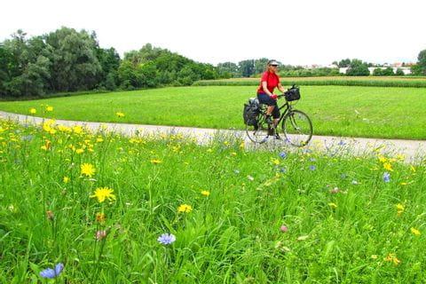 Radweg durch blühende Wiesen in der Pfalz