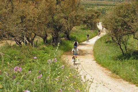 Radler zwischen Olivenbäumen