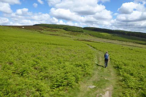 Wanderer umgeben von satten Wiesen am Wicklow Way