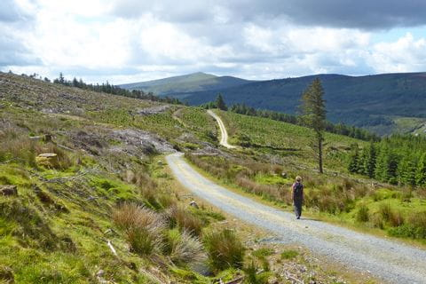 Wanderin in den Wicklow Mountains