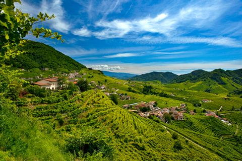 Panoramablick auf die Weinberge