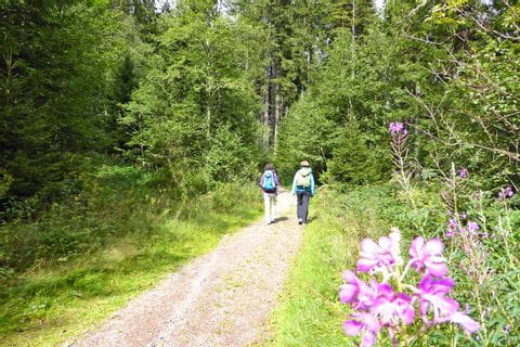 Hiking through the Black Forest