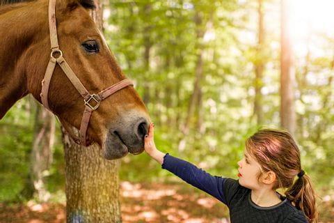 Mädchen streichelt das Pferd am Kopf