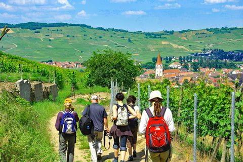 Schöne Wanderwege durch die Weingebiete