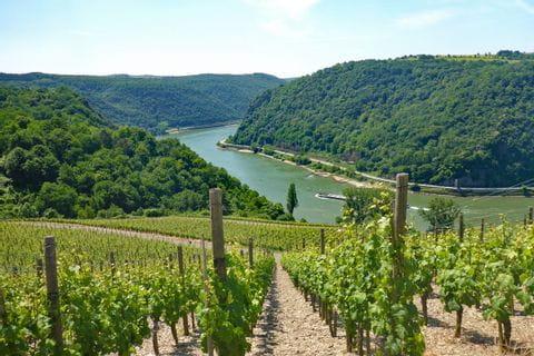 Wanderreise Rheinsteig mit Panoramablick