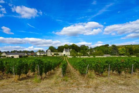 Weingärten in Chenonceaux entlang des Loire-Radweges
