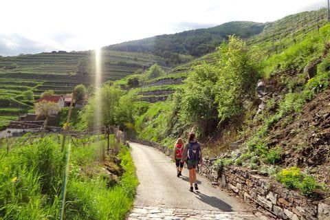 Wanderweg durch Weinberge in der Wachau