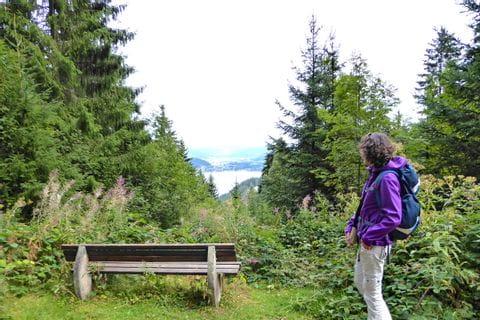 Herrlicher Seeblick im Schwarzwald