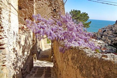 Blütenzauber in der Wanderregion Amalfiküste