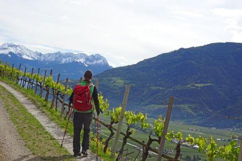 Wanderweg an Weinreben