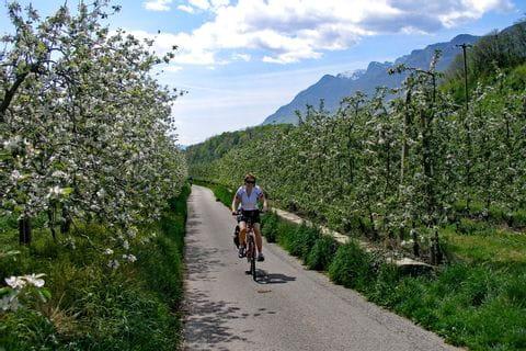 Apfelblüte am Etschradweg