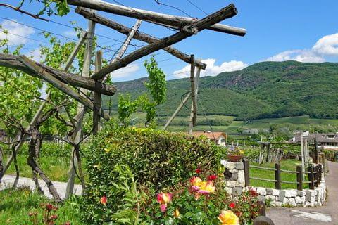 Bunte Weingärten beim Wandergenuss Via Claudia