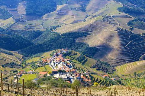 Wanderpanorama in der grünen Douro-Region