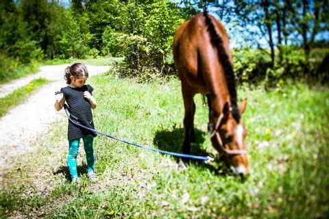 Mädchen führt das Pferd am Halfter