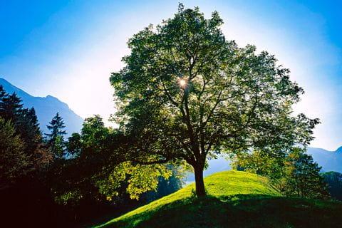 Traumtag im Bregenzerwald