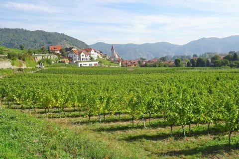 Blick auf Weißenkirchen und Weinreben