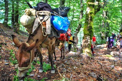 Esel als Wanderbegleiter