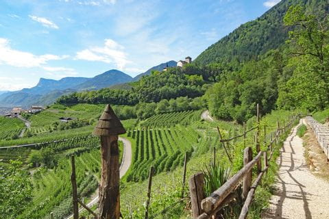 Mountain hiking through green wineyards near Merano