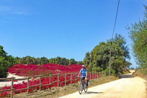 Radfahrer fährt an der Algarve am Blumenmeer vorbei