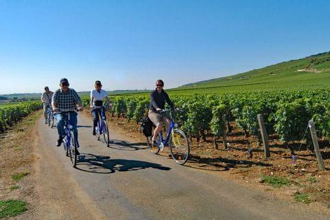 Radfahrer im Weingarten