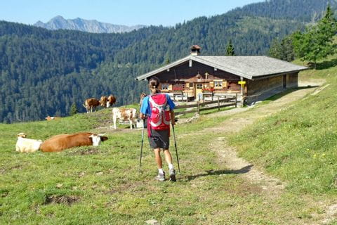 Wanderer auf dem Weg mit Alm, rundherum grasende Kühe