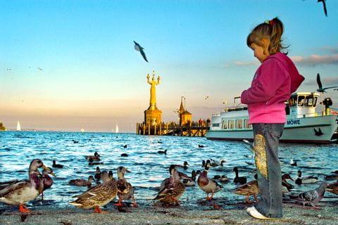 Enten am Ufer des Bodensees in Konstanz