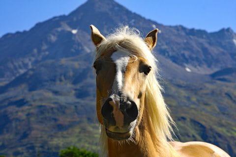 Pferd vom Urlaubsreithof in Tirol