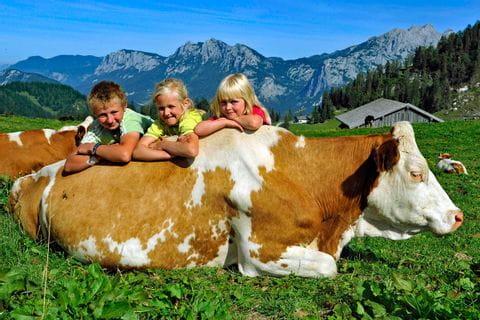 Kinder lehnen auf der Kuh auf der Alm