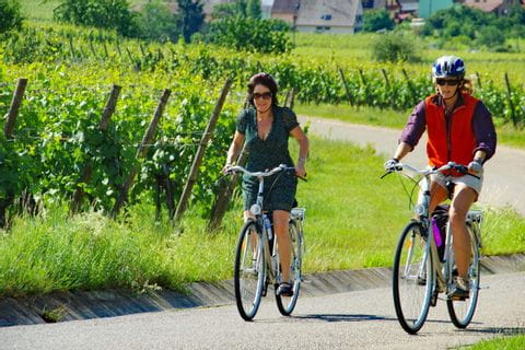 Radfahrer auf dem Weg durch die Weinreben
