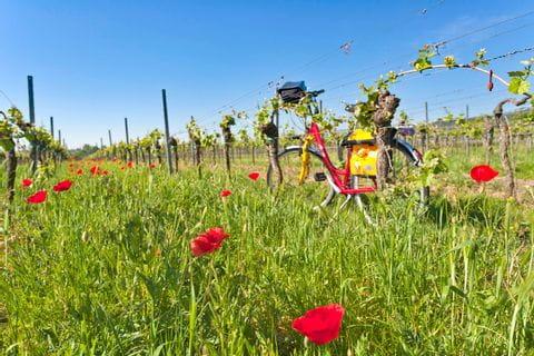 Eurobike Rad zwischen den Weinreben