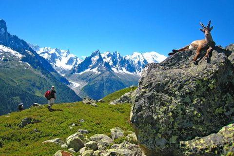 Wandern mit Blick auf die Landschaft und Tiere am Mont Blanc