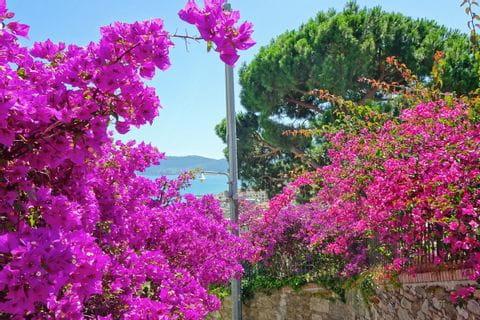 Blumenpracht an der Küste Liguriens
