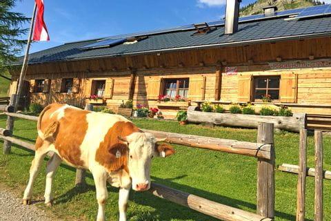 Eine Kuh bei der Almhütte