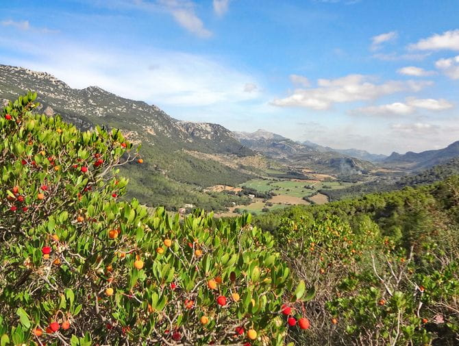 Panoramawandern durch die blühende Vegetation des Orient-Tals