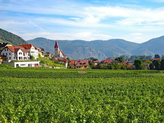 Wandern mit Blick auf Weißenkirchen und Weingärten